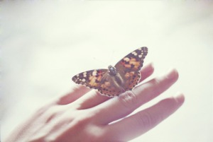 butterfly / weheartit.com